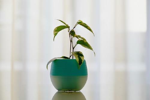 plant-4024903_640