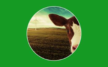El metano de las vacas, ¿una fuente de energía alternativa?