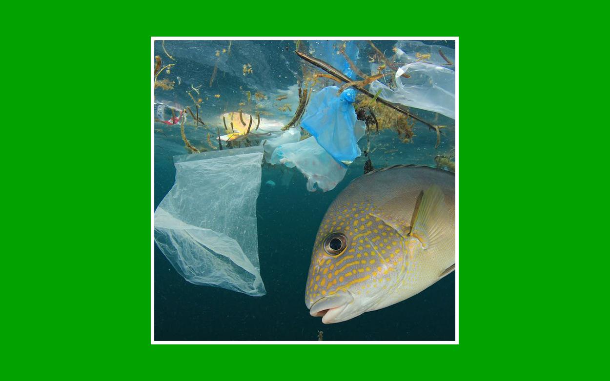 contaminacion plastico agua
